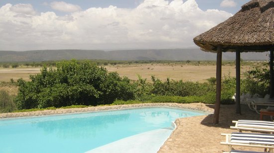 Manyara Wildlife Safari Camp:                   PISCINE