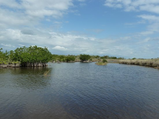 Capt Mitch's - Everglades Private Airboat Tours:                   beautiful day
