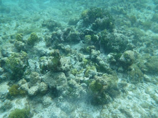 Palm Island Resort & Spa:                   snorkeling