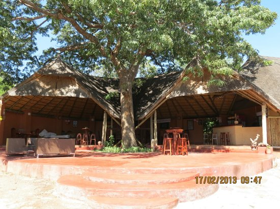 Kwalape Safari Lodge :                   il bar