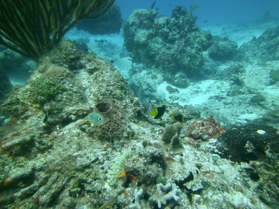 Eden Rock Diving Center: grand cayman dive