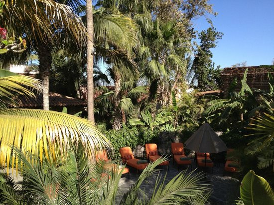 Todos Santos Inn:                   VIew from outdoor dining area