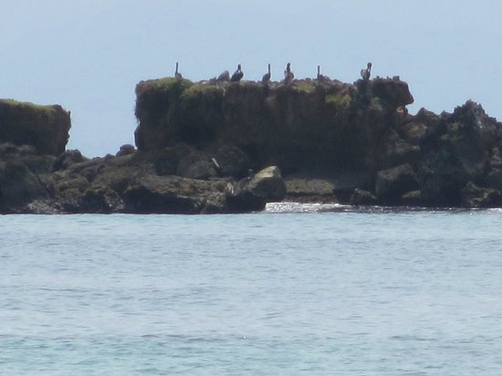Grand Bahia Principe Cayacoa:                   Rock Island with Pelicans