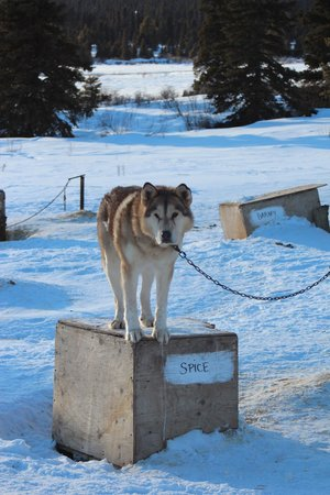 Sky High Wilderness Ranch:                   Sled dog stables...