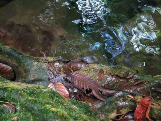 Mermaid's Secret - Riverside Retreat:                   Secret Pool                 