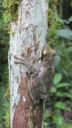 Shiripuno Amazon Lodge:                                                       Saw this guy on a hike