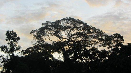 Shiripuno Amazon Lodge:                                                       beautiful sunsets!
