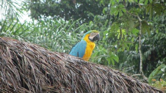 Shiripuno Amazon Lodge:                                                       At the village