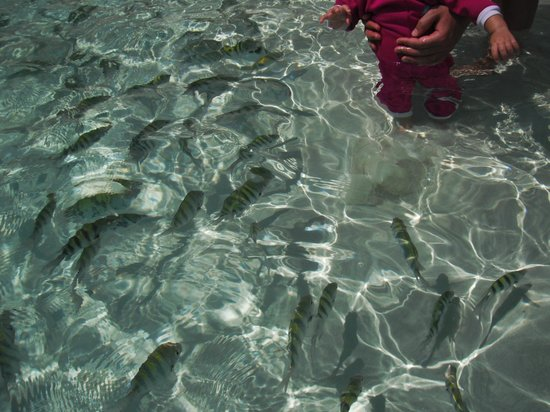 Occidental Grand Xcaret All Inclusive Resort:                   Feed the fish in the cove
