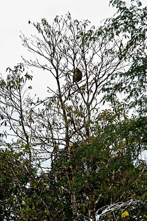 Lost Iguana Resort & Spa:                                     A sloth high up in the treeline during the Arenal volcano hi