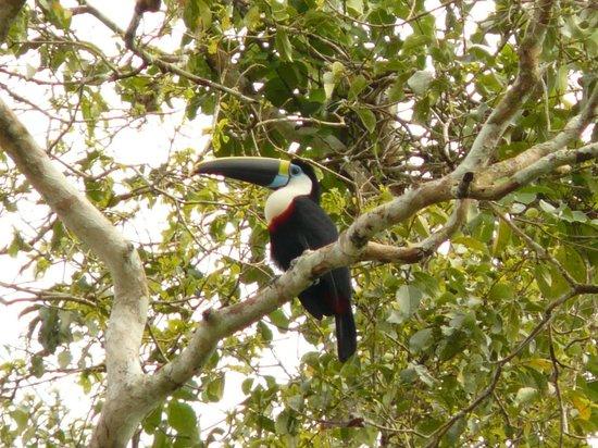 Amazon Rainforest:                   observacion de aves en la reserva nacional de tambopata