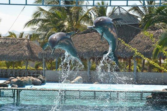 Aquaventuras park:                   Dolphin Swim