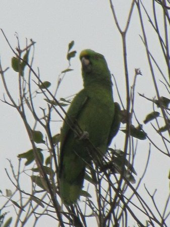 Xtabi Resort:                                     Our distinguished Parrot friend
