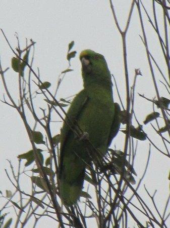 إكس تابي ريزورت:                                     Our distinguished Parrot friend                           