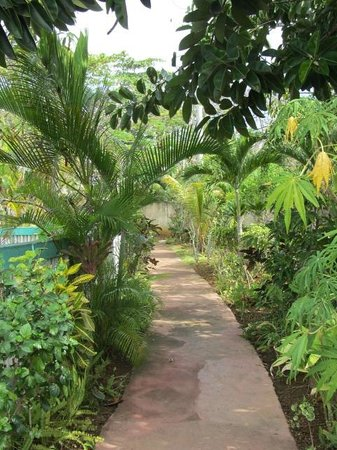 Xtabi Resort:                                     walkway in Eden
