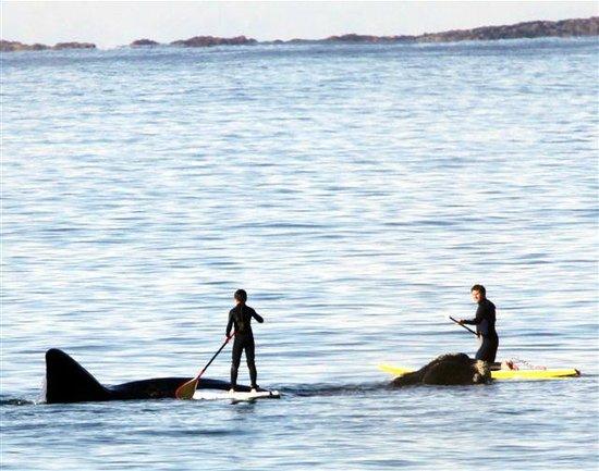 Seashells Merimbula: Whales & SUP boarders- 1 minutes walk!