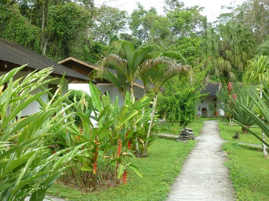 Suizo Loco Lodge Hotel & Resort:                   Path to rooms
