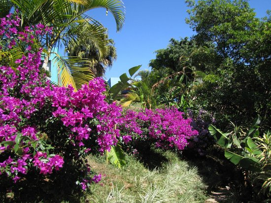 Xandari Resort & Spa: Beautiful flowers along the trails