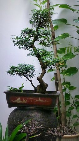 Courtyard @ Heeren Boutique Hotel:                   Bonsai in internal gardens