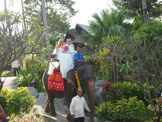 Nora Beach Resort and Spa:                   Bride arriving to the ceremony on an elephant
