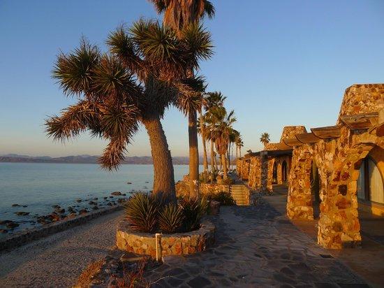 Posada de las Flores - Punta Chivato: Junior suites
