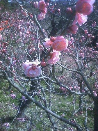 Nakayama-dera:                   3月5日