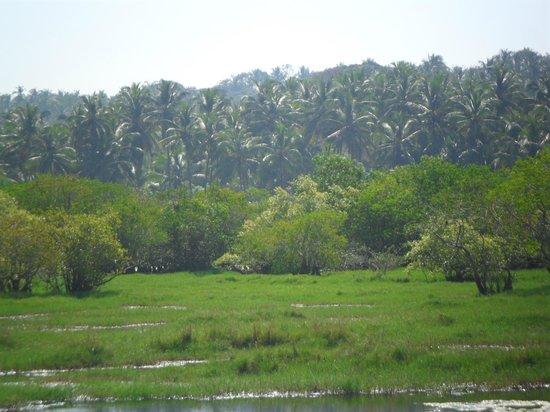 Blue Mermaid Homestay:                   birds in the backwaters....