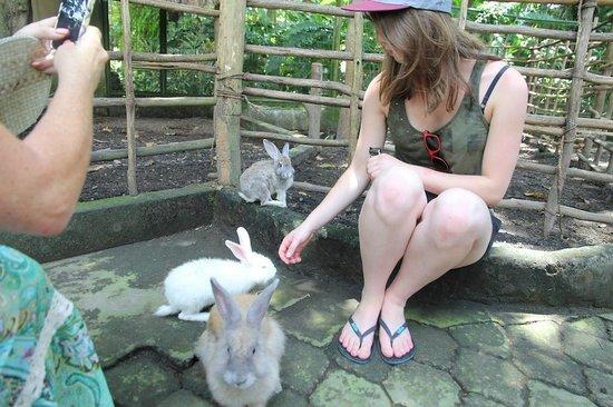Petting Zoo Area Picture Of Bali Zoo Sukawati Tripadvisor