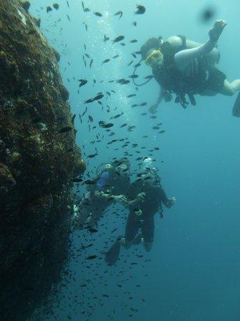 Goodtime Adventures, Koh Tao: Diving Green Rock