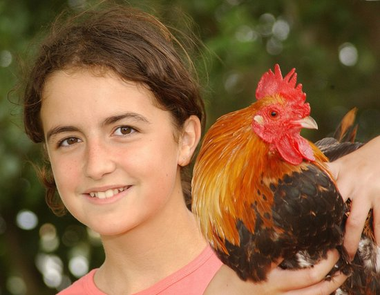 DairyLand Farm World: Up close with the animals