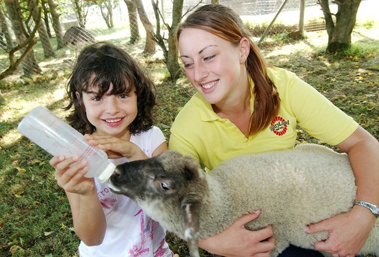 DairyLand Farm World: Lambs never seem to get full-up! We need lots of helping hands at feeding time!