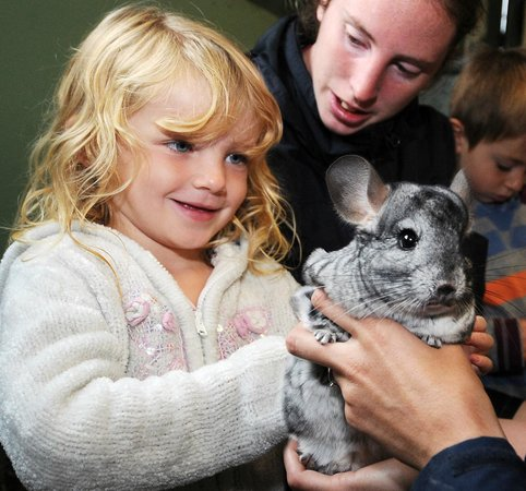 DairyLand Farm World: Have you ever held a chinchilla?