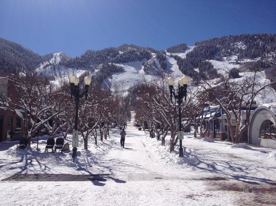 Aspen Silverglo :                   Beautiful Aspen