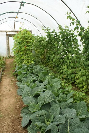 Trelaske Hotel & Restaurant: Our Vegetables in the Polytunnels