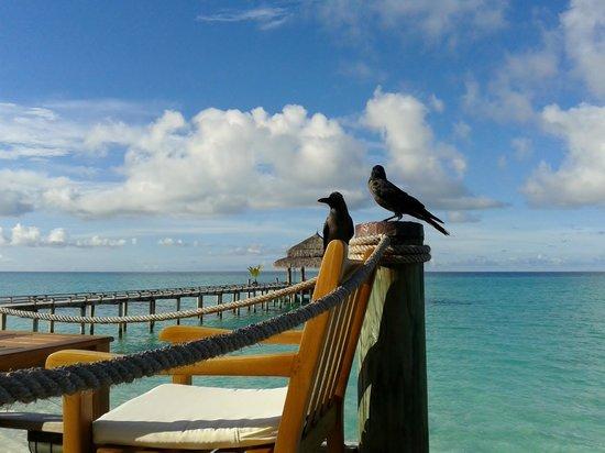 Kuramathi Island Resort:                   Bar - lagoon side