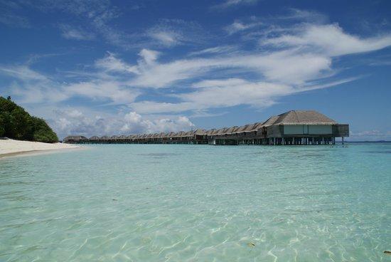 Reethi Faru Resort   Bio Luxury   Raa Atoll, Maldives