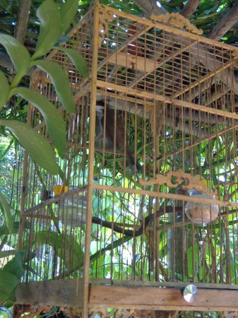 Betel Garden Villas:                                     one of the birds