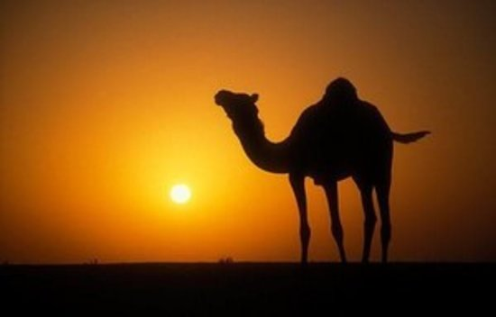 Cameltrekking Merzouga - Private Day Tours
