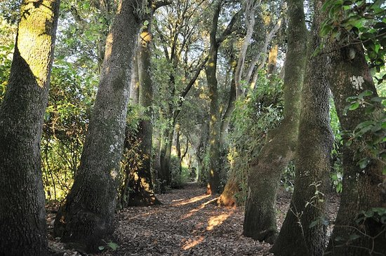Agriturismo Borgo Spante: il bosco