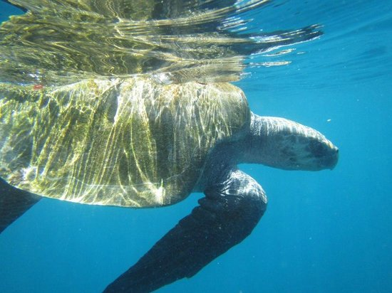 The Divine Dolphin:                   Sea turtle