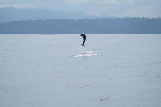 Drake Bay, Kostaryka:                   Dolphin