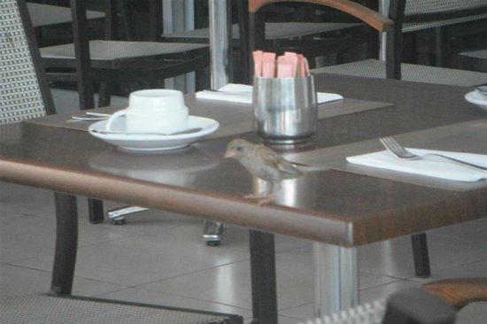 Mediterranean Beach Hotel:                                     Our daily guest