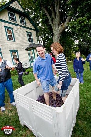 Penns Woods Winery: grape stomping fun!
