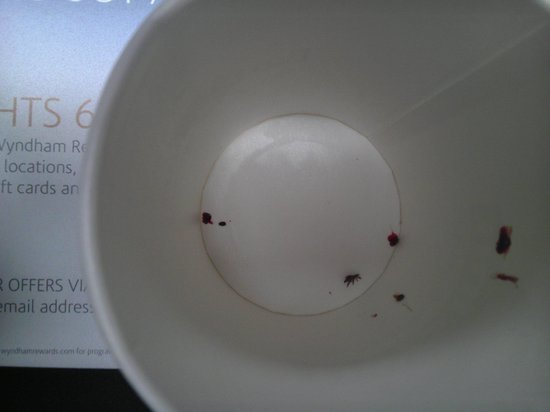 Days Inn Homestead:                   I place the bed bugs inside this cup and showed it to the front desk person