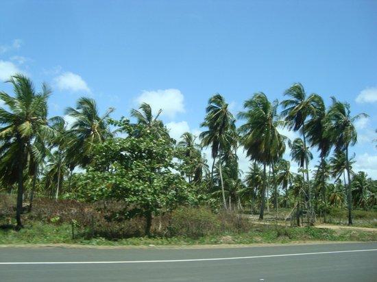 Pirambu beach:                   Paisagem