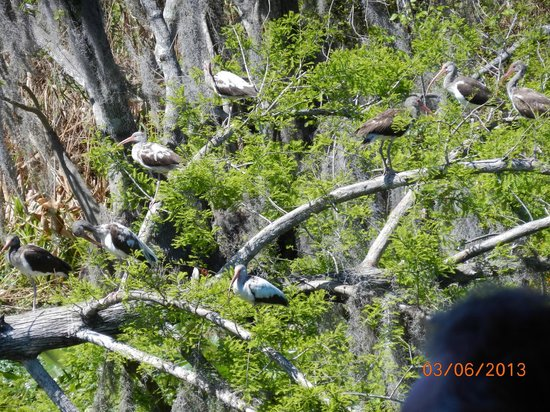 Blue Heron River Tours:                   A cluster of birds, the Captain identified and described every species.