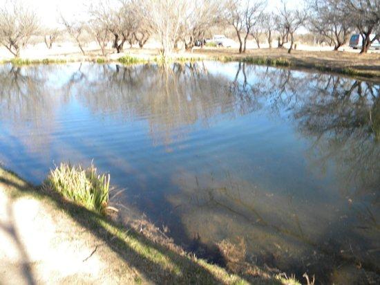 Benson KOA: Pond and Koi pond at KOA