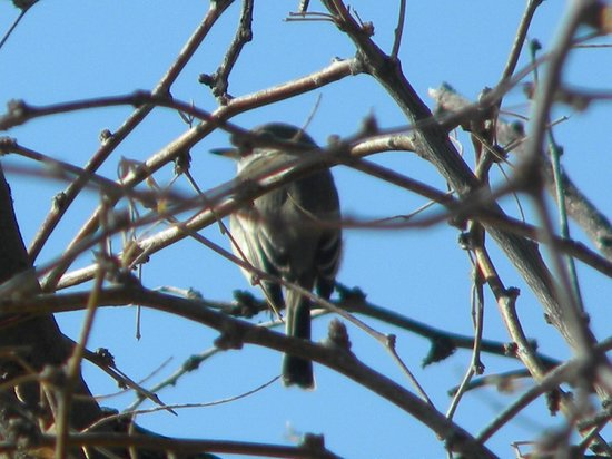 Benson KOA: Bird watching ay KOA