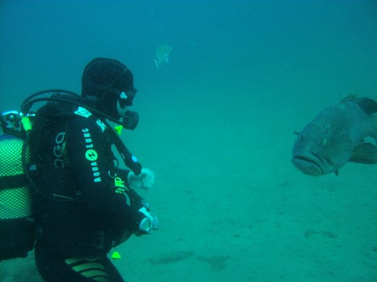Canary Island Divers Lanzarote:                   freindly