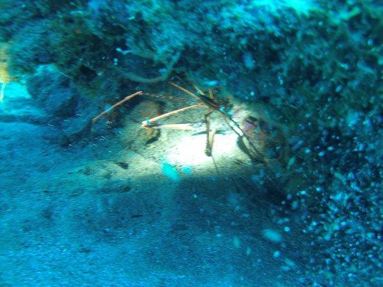 Canary Island Divers Lanzarote:                   amazing